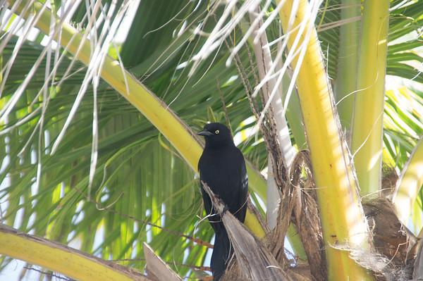 17-041 Curacao 13 Feb Bob