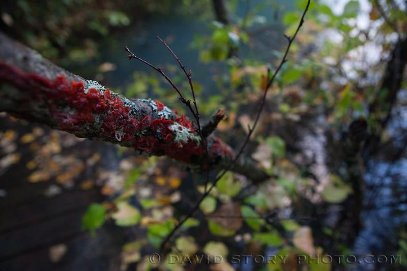 2017 09 24: Lichen along the Kenai. Cooper Landing, AK.
