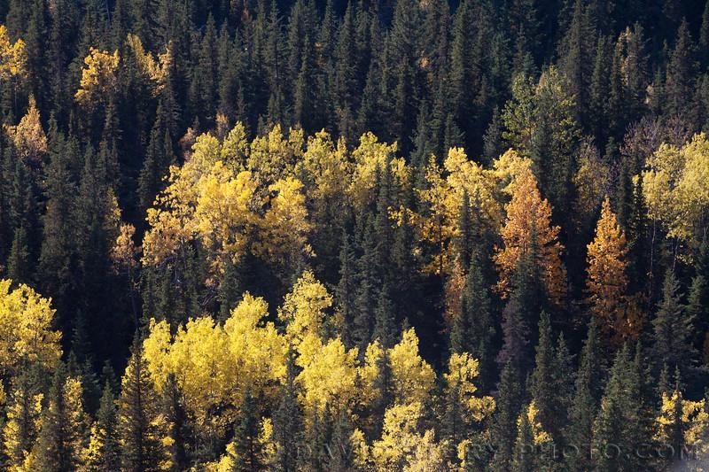 2017 09 30: Fall on Kenai Lake, AK. 09 30: Fall fat biking. 09 30: Fall colors on the Kenai Peninsula, AK.