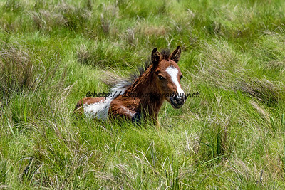 Summer Breeze's Filly