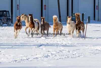 Lightning, Zustan, Wild Star, Smooch, Goldie, Bay Princess and Glory