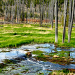 07 Apr 17This boggy area of Yellowstone is known as Grizzly Flats. Over the years it has been a location that I've enjoyed driving by always in hopes of seeing something grizzly like wander ...