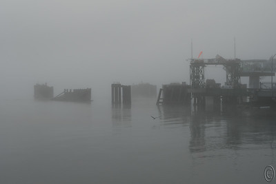 05 Dec 17	Today's monochrome submission will be in gray and white vice black and white. Woke up this a.m. to a fair amount of fog noticeable not only by what we saw but by what we heard, the fog horn down at the ferry terminal announcing to all interested that visibility was less than 1/4 mile. Actually it was far less than that and made for an interesting sight at the terminal. While waiting for the ferry to sneak in I grabbed several shots of a sailboat at anchor, a group of workers attending to something on one of the stand offs, and a just visible terminal. The workers were doing something to what I initially thought was a harbor fog horn but I now believe it was something else that was in need of apparently immediate attention. While I was taking the photos the blast of a fog horn was repeatedly reminding me of just how dense was the fog. There is a ferry in this shot but you won't see it. Moments after I pressed the shutter you could faintly see it materialize directly above the Great Blue Heron.  This is just how it looked. I've done nothing to it. Nikon D500; 18 - 200; Aperture Priority;  ISO 200; 1/320 sec @ f / 9.