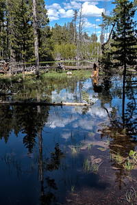 """27 Jul 17I've written a couple of times discussing the effects of the large snowfall during this past winter. Directly to the west of the Firehole River and south of the Firehole Lake Drive can be found Firehole Lake. That is to say sometimes. You won't find it on the map of Yellowstone the park rangers give you upon entering and you may not find it at all as there is no road sign saying Firehole Lake as there is for both the river and the drive. In fact, even if you know where it is, you may not see it at all! That's because it may not be there when you visit irrespective of the time of year.  The lake is dependent on snow/rain fall, and when there isn't enough there isn't a lake. In 5 visits we've seen it 3 times; 2013 yes, 2014 yes, 2015 no, 2016 no, and 2017 yes and over flowing! There is a picnic area on the map where the lake can be found when present. For our 2013 -2016 visits the picnic area was open and accessible with a nice lake in front of it for 2013 & 2014, just a dry lake bed in 2015& 2016, and totally inaccessible and under water in 2017.  It was simply amazing to see the difference this year compared with the previous four.  In the image for today the """"normal"""" edge of the lake is behind the tree that is lying horizontal with grass on each side and the orange stump immediately in front. The water behind that fallen tree is usually the shoreline of the lake. At the right hand edge about 1/3 the way down you can make out a picnic table that is standing in about 18 - 20 inches of water.  In the past that picnic table was roughly 50 feet from the lake edge when the lake was present. It was like this in many areas through the park and made for some really impressive sights. I'll share more in the future including a pano of the entire lake area as we saw it that week.  Other than a tiny amount of micro contrast enhancement, this is straight from the camera.  Nikon D500; 18 - 200; Aperture priority;  ISO 200; 1/320 sec @ f /10 with a -2/3 stop exposure comp"""