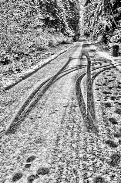 02 Jan 17After suggesting that I would be limiting the B&W images, Jan picked this image out from a grouping of 10 so I figured I'd better go with it.   One neighbor south and east of us, an elderly lady, drives her small vehicle from her house to the street each morning heading south, then after having traveled about 12 feet stops, backs up about 15 feet, and heads back into her driveway stopping momentarily to pick up her paper before driving back to the house. It is sorta funny when you watch her do it. But do it she does, and every day without fail. Occasionally she is in the process when I take her majesty out for her morning ablutions, so when it happens during walk time we just casually observe. Her driveway is one of Maggie's favorite places to explore and I don't blame her as the driveway is absolutely beautiful with a moss lined center bordered by fir and cedar trees from one end to the other. As you gaze into this photo you will see a set of three mailboxes on the right although you may not be able to make all three out clearly. Directly across the road on the left is the entrance to our drive. The snowfall amounted to a full 1/4 inch which when combined with what we got a couple weeks back gives us a total of 3/16ths for this winter; exactly 3/16ths more than our total for last winter if my memory serves me correctly which Jan claims is a rare event and does not agree with my assessment. Off tomorrow early to shoot eagles, mountains, and whatever else we come across up in the Skagit.<br /> <br /> This is a straight from the camera shot converted to B&W using the Topaz bw effects 2 plug-in.  Nikon D300s; 18 - 200; Aperture Priority; ISO 400; 1/125 sec @ f / 5.6.