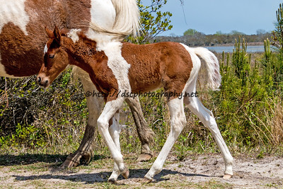 Beach Baby's Filly/Carli Marie