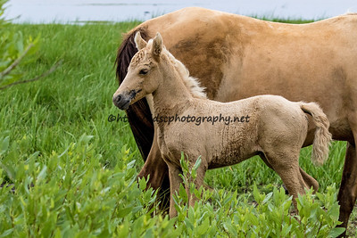 Kachina's Filly/Kachina's Shenandoah Raindancer