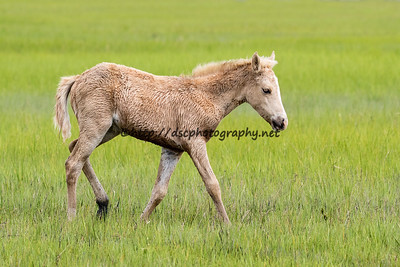Mayli's Filly/Miss Admiral Halsey