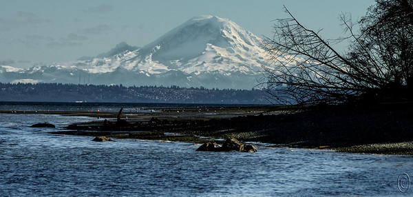 "12 Mar 18	We'll pick up where we left off Friday, that is, photographically speaking. On most of our visits at Eglon Beach, now as well as when I was a kid, Mt Rainier is/was for the most part a distant object, large enough to be of interest, but nonetheless a goodly distance away. A few times a year however it plays a little game and moves apparently about 70 miles closer and appears as though it is just behind the next hillside. I shared a similar kind of shot last year taken from Gig Harbor with a yacht club full of sailboats in the foreground. This time the foreground is Eglon Beach at a 1.6 low tide. Hiding behind the branches of the tree you might recognize a few of the taller buildings comprising the Seattle skyline. The small white line above and to the left of the orange ball is the Edmonds ferry terminal with one of the ferrys just departing. The location at which I was standing to take the shot would have been a pier in my youth but long since gone as part of the county parks ""improvement"" plans.  ""Improvement"" of course is all in one's perspective. But it's been gone for several decades and today nothing of it remains save for the memories and some old photographs.  I've cropped the original some, added a fair amount of contrast enhancement to bring out an otherwise very hazy mountain, and removed a few distractions. Nikon D500; 18 - 200; Aperture Priority; ISO 250; 1/2000 sec @ f / 8."
