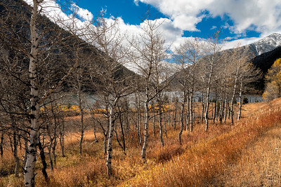 13 Nov 18	On both sides of the road (hwy-287) at what I guess one would call the eastern end of Quake Lake, or at least the end furthest away from where the earthquake occurred that formed the lake are stands of aspen which in the spring have bright green leaves, in the fall golden yellow leaves, and as winter approaches just nude branches. When leafed out, from spring through fall, whenever the winds make their appearance they quiver making the most wonderful sound as well as putting on a real show of activity. After shedding their dress they still provide for some wonderful viewing with their white trunks and branches randomly interrupted with blotches of black, looking as if Bev Doolittle had painted them instead of horses.  I love photographing them in the sunlight and I had to spend the better part of a half hour mess'n with Ol Sol while he played hide and seek with the bundles of water vapor churning overhead. This is just one of my favorite shots from that session of which there are several. This one features Quake Lake in the background.  I did a little light painting on this one using some dodging and burning to force your eyes where I want them to be. Otherwise this is exactly how it looked.  Leafless in Montana   Nikon D500; 18 - 200; Aperture Priority; ISO 400; 1/800 sec @ f / 9.
