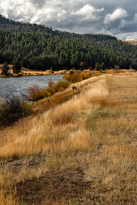 18 Oct 18Today I'm sharing a barely creative version of an image of a hillside along the Madison river that is the location for the oil spill image I shared two years ago. I picked this one to show the range of the color yellow I mentioned yesterday (but just on the golden side). I'll share another along the way that emphasizes the yellows on the bright yellow side. The sunlight was making its presence known every now and then as the clouds were doing their best to keep things on the gloomy side. But every once in a while, for perhaps 5 - 10 minutes at a time, the sun would find an opening before the clouds rushed to block it out. When the sun did break out it was if another movement of the Symphony in Yellow was being played. Just off to my left two fishermen were playing catch with the trout with the trout teasing them like a young flirt. Unbeknown to me at the time there was a cow moose with twins grazing just on the other side of the trees lining the highway. I just happened to see them as I was driving off and stopped to try and get a portrait or two. Mom however had other ideas and all I was able to capture was a single frame of their rumps and ears as they headed back into the woods. And with the heavy brush lining the roadway everything was cluttered with my having to shoot through the branches. But I did see them. Not all was lost however as on the opposite side of the roadway was a beautiful yellow Aspen begging to be recorded. Which I did just before the clouds won and the rain commenced.  This is pretty much straight from the camera save for a small bit of contrast enhancement. Symphony in Yellow   Nikon D500; 18 - 200; Aperture Priority; ISO 320; 1/500 sec @ f / 9.