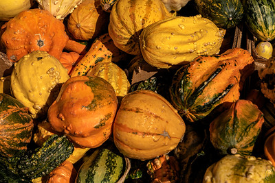 26 Oct 18It seems like this fall has been one of the better ones in many years. Even if you live in an area without a lot of vegetation that turns colors, you can still likely find it in your local supermarket or veggie stand. An example of such is this capture of gourds shot at our local supermarket. I love these things both as food and decoration and having them around to shoot is lots of fun. My biggest challenge is trying to shoot them without the little stickers on them showing up. Of course one can always remove them in editing software, but it more fun to accept the challenge of not including them in the first place. Then there is the challenge of not including anything else which in this case I failed having not been able to fully hide the boxes. Just for fun, if you have the time and won't be getting in the way of the shoppers, wait until you a visitor in the frame before pressing the shutter.  This is basically straight from the camera. Colorful Gourds  Nikon D500; 18 - 200; Aperture Priority; ISO 320; 1/2000 sec @ f / 9.
