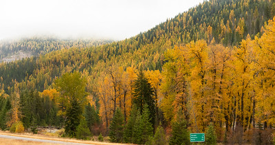 04 Apr 19	Today's submission for Theatrical Thursday is going to be straight up, but provided as a documentary shot only. I've left in an I-90 road sign to give its exact location, 5 miles west of Haugen, MT where we always stay both directions on our Yellowstone trips. You are looking south with I-90 East at the bottom of the image along with a snippet of the St Regis River. My reason for sharing such is that if you've never heard of or seen the evergreen tree known as either Tamarack or Larch, you likely would think I've created a hillside of yellow evergreens, but I haven't. The green of the road sign and some evergreens, as well as some of the other colored autumn foliage, should also help to assure you I haven't concocted this image. All my life I've wanted to capture a decent photo of this unusual tree and while this shows off the trees to advantage, this isn't the shot for which I was hoping, but it does show them for what they are. I do have a couple to share that do represent the shot(s) I want(ed) but I'll share them next week. I still haven't gotten a shot of these trees high up in the Cascades, maybe now I never will, but this at least gives you an idea as to how these lovely trees look in the fall. The white area is the morning cloud layer which when I arose was at street level. I don't consider this a keeper in any fashion, it's just a documentary, and nothing more!  I've cropped a little off the top, bottom, and left side for composition. Follow the Yellow Treed Road  Nikon D500; 18 - 200; Aperture Priority; ISO 640; 1/250 sec @ f / 7.1.