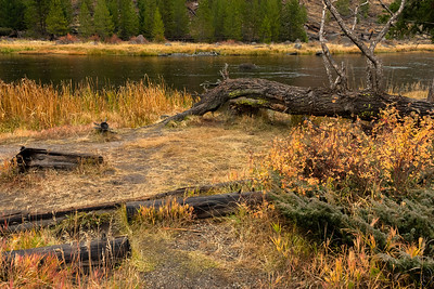 "09 Jan 19	Back to my favorite river in Yellowstone, the Madison. Half way in from the West Yellowstone gate to Madison Junction is a section of the park known by the locals as 7 Mile Bridge Area.  I've never found anything identifying the area as such, but at the 7 mile mark along the road is the only bridge on that section of road and it is also where I've seen others congregate who said go to the 7 Mile Bridge Area. I've been shooting in this section of the park on every visit and it has to be my favorite small section of the park. The river is on your left as you enter the park but crosses under that bridge at the 7 mile mark and then is on your right all the way to its headwaters, the confluence of the Firehole and Gibbon Rivers. This is a shot of the river bank roughly one mile prior to crossing the bridge. The river is perhaps one foot in depth in this area and you can see the bottom with ease. This is an early afternoon shot with bright overcast skies giving some nice saturation to the color. One of those days when you want to wet a line, even if all you have is just the line and preferably few others to keep you ""company."" We parked the vehicle where we could off the road and walked down to      the bank. Would have stayed longer than we did but when the water started dripping from the overcast I thought it prudent to press on.  Other than a little dodging and burning this is straight from the camera. Madison River Rest Stop  Nikon D500; 18 - 200; Aperture Priority; ISO 800; 1/200 sec @ f / 9."
