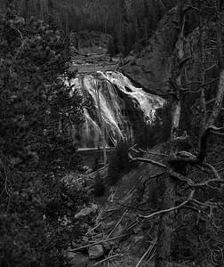 23 Jan 19	Back to the more mundane today with a B&W shot of Gibbon Falls. I've shared several images of this falls before but never in B&W. Not sure how this will present for you as on this mailbox it is rather drab but on my graphics box where I created it it is quite stunning! So if it is somewhat drab on your screen trying adjusting either the contrast or the highlights and shadows. Either way it should preset better. This falls is somewhat deceiving as the water in the river (Gibbon) isn't much deeper than two feet and likely not even 18 inches below the falls where it is wider than it is above. The top of the falls slices the river on an angle instead of head on like most falls so it spreads the water over a much wider area than the width of the river just above it. This results in the water being spread out over a much wider rocky face as it tumbles down to the base only once again to be forced back into a more normal channel. During the spring snow melt you can't see most of the rock surface as you can in this late fall shot. If you are one of those who save the images, look back for one I've sent from the May time frame to see the difference. I've wanted to walk down to the river's edge below the fall many times; might just attempt it this year. I've walked to the edge and along the bank above the falls a couple times, but this is a cake walk. The bottom end is a different story. Highly recommend this for your Yellowstone bucket list.  This is what the camera saw except for the B&W conversion.  A Brite Spot in the Forest    Nikon D500; 18 - 200; Aperture Priority; ISO 400; 1/500 sec @ f / 9.