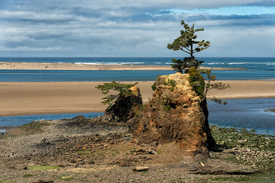 09 Jul 19Roughly 3 hours (110 miles) south of Astoria on the Columbia River to Lincoln City - both in Oregon - on Highway 101 is Siletz Bay. This is a really lovely section of the Oregon coastline and well worth the drive to visit. There is much to see including the Siletz Bay Wildlife Refuge but we did stop to see any of it save for a brief shoot at one of the roadway pullouts. Directly offshore lies a major fault known as the Cascadia Subduction Zone. Apparently there was a major earthquake there on 26 Jan 1700, supposedly 9+ on the Richter scale which created a 50 wave (Tsunami) which struck the shoreline exactly 20 minutes later with many more waves to follow. Interestingly there was no scale for measurement back in 1700, no way to have measured the time it took to arrive nor the height of that wave, nor how many waves followed. Still, there is a big sign telling you all about this event and it is very specific in its information. Always nice to have a little humor on your travels!   Road sign apart, it is a lovely location and on the day of our visit bathed in bright sunshine and blown spotless by blustery winds accompanied by a delightful show of water vapor over an incoming tide. We made just this one stop as we were on our way to a zoo at the bottom of the state where we were to hold a variety of baby animals.  I straightened the original, cropped off a bit of needless material, and added a wee bit of contrast enhancement. Remains  Nikon D500; 18 - 200; Aperture Priority; ISO 500; 1/2000 sec @ f / 9.