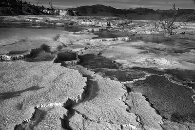 26 Nov 19	We return to Yellowstone as promised and will remain here for the next few images. B & W today as I not only like this version best but it is B & W Tuesday. We return to Mammoth Hot Springs and to the same boardwalk from which I took that other photo with the dead trees. This is a view just a few feet, perhaps 6, to the west of that spot. The hot springs at Mammoth are supposed to have been created over a period of thousands of years. They constitute a large complex of hot springs sitting atop a hill - likely a mountain on the right coast - of travertine. As the water cooled it left behind the calcium carbonate previously dissolved in it creating the deposits you see in the image. Don't quite understand how it forms the stair stepping appearance but whatever the cause it makes for a lovely terrace. Hang onto this one for at least one day as we'll look at the same image in color tomorrow. I think you may appreciate both.  This is almost straight from the camera. Altered to B & W obviously but also added a tiny amount of dodging and burning and a small amount of contrast enhancement to help delineate the texture of the calcium carbonate.  Printed on Metal  Nikon D500; 18 - 200; Aperture priority; ISO 200; 1/400 sec @ f /11.