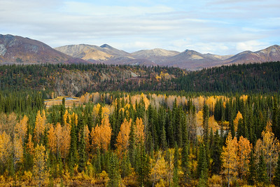 Fall colors along the Denali Highway.