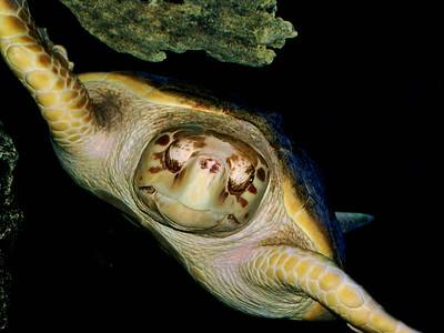 Shells and Scales - Newport Aquarium