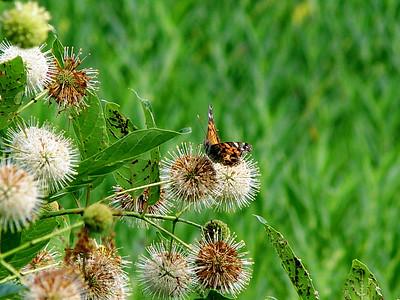 Other Butterflies