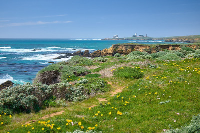 Poppies in bloom along the bluffs at San Simeon & Piedras Blancas