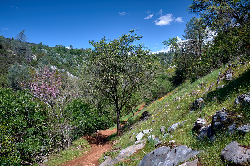 Hiking trail to Natural Bridge, and some of the wildflowers along the way