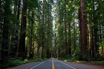 The Avenue of the Giants, parallel to US101 in Humboldt County