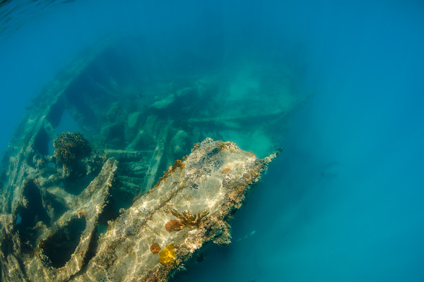 Many varieties of fish and corals take refuge on the Andes in Deep Bay, Antigua