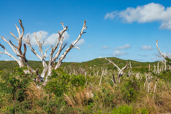 Father Jerome's Hermitage on the highest hill in the Bahamas on Cat Island