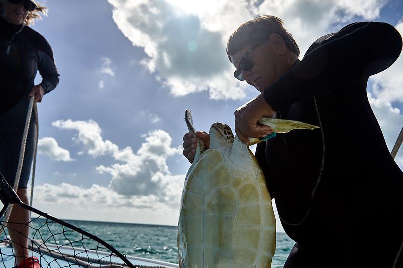 bahamas sea turtles