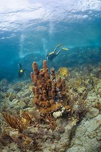 Pillar Coral near Virgin Gorda