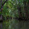A branch of the Indian River