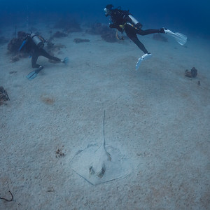 A stingray hides in the sand down past 100' off Boca Chica, Dominican Republic