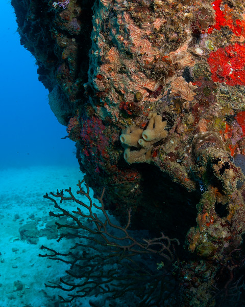 Sponges and corals starting to take to the Catuan six years after it was sunk