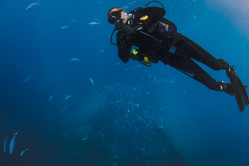 Bob, owner and manager of Treasure Divers on Boca Chica, on ascent with some Bar Jacks