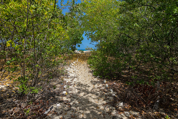 The trail to Petite Carenage is a tunnel lined with conch shells until emerging at the beach.
