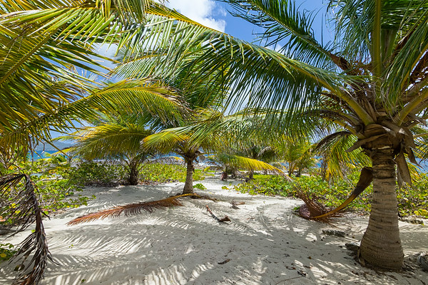 There are many areas on Sandy Island where you can surround yourself in the shade of palm trees and forget about the rest of the world.