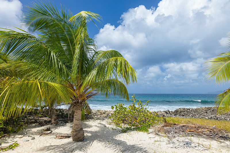 """One of the """"new"""" palm trees planted after Hurricane Ivan stripped Sandy Island of vegetation."""