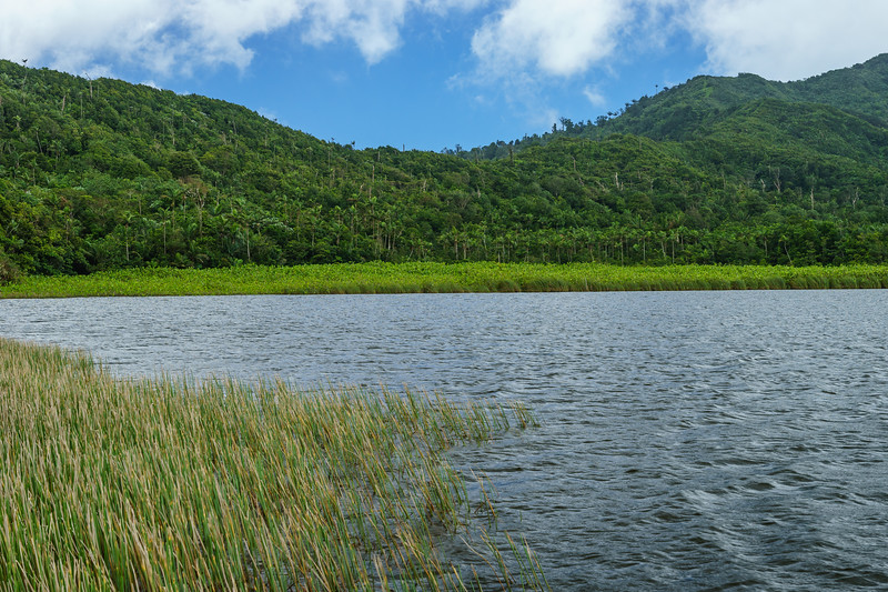 Looking towards the northwest side of Grand Etang Lake, and the jungle that hides the shoreline trail.