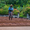 An employee of Diamond Chocolate Factory surveying cocoa on the drying racks.