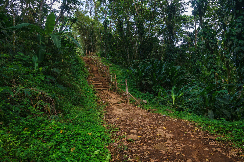 One of the bamboo staircases carved into the hillside on the Seven Sisters Falls trail.