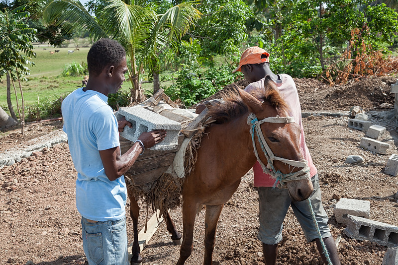Mules do a lot of the heavy lifting on Ile A Vache, but a suprising number of people do as well.