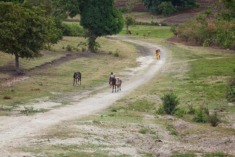 A horse carrying water jugs near Baie La Hatte, Ile A Vache, Haiti.