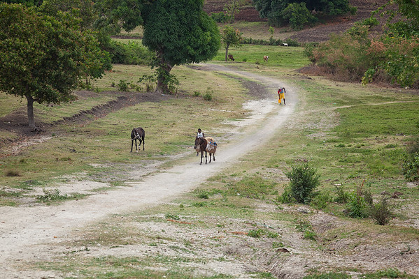 A horse carrying water jugs near Baie La Hatte, Ile A Vache, Haiti.