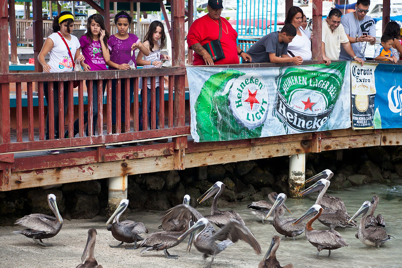 Vendors sell sardines at La Guancha in Ponce, where pelicans and fish await feeding