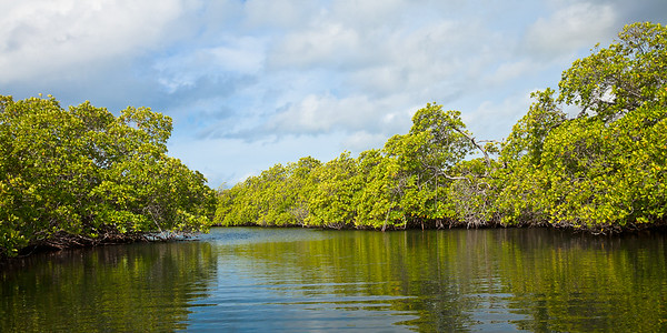 Exploring the mangroves in Ensenada Honda, Vieques