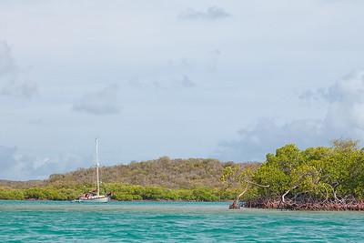 Saoirse protected in the mangroves of Ensenada Honda, Vieques
