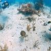 Swimming with a Green Sea Turtle in Culebra, Puerto Rico