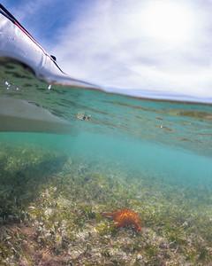 Passing over a Cushion Sea Star in my kayak, Ensenada Honda, Vieques