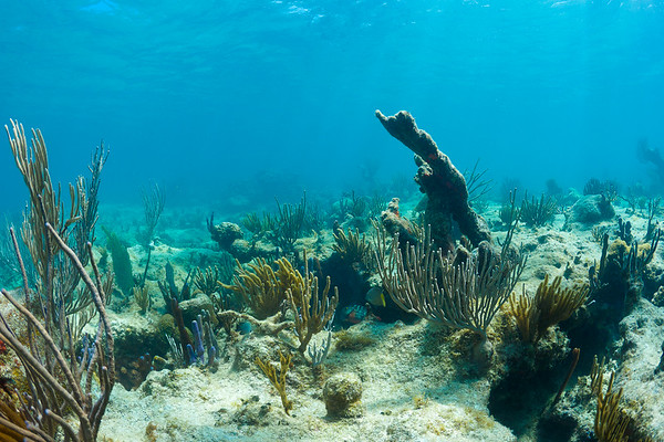 At Isla Culebrita, you don't have to go scuba diving to see the same variety of marine species you'd see on a normal dive